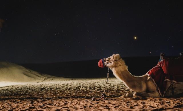 Клонирани камили превземат арабския свят