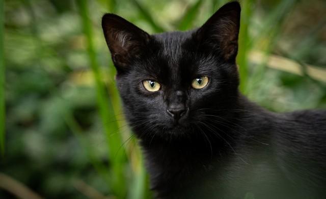 Котката просяк, на която е трудно да се откаже (видео)