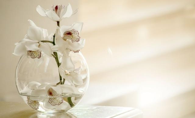 Орхидеите лекуват рак