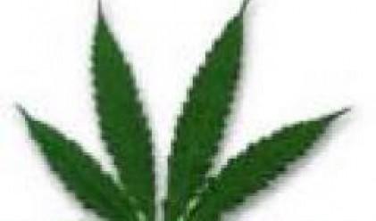 Търговията с марихуана ощетява щатските данъкоплатци с 41.8 млрд. долара годишно