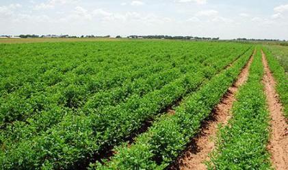 51% от територията на страната е за селскостопански нужди