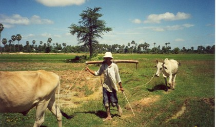 83 млрд. долара годишно необходими за изхранването на света