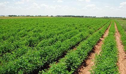Колко пари са нужни, за да стане земеделието ефективно?