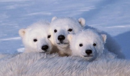 Coca-Cola сменя цвета заради белите мечки