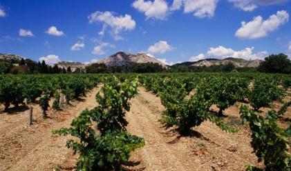 Франция е най-големият производител на вино за 2011 г.