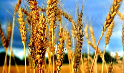 ООН: Задава се хранителна криза догодина