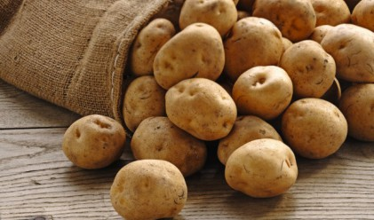 Между 50% и 70% по-ниска реколта от картофи