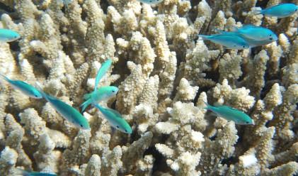 Търсене на нефт на път да убие втората най-голяма рифова система