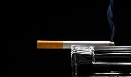 19-годишно шимпанзе пуши по една кутия цигари на ден