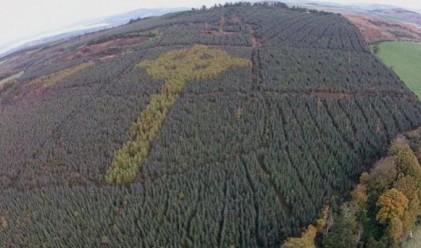 Масивен келтски кръст тайнично расте в ирландска гора