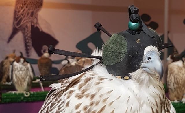 Тези птици струват милиони и пътуват в бизнес класа
