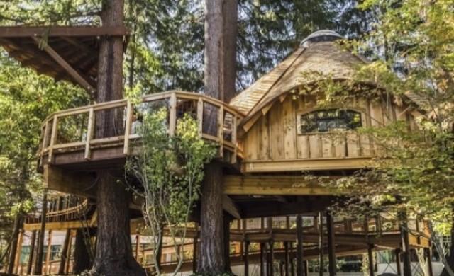Microsoft създаде за служителите си... къщи на дърво