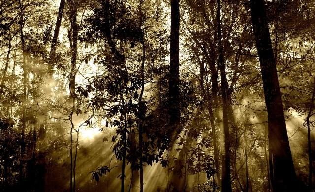 Трите най-страховити гори в света
