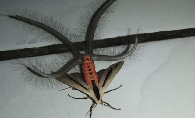 Видео на странно насекомо с 40 млн. гледания за няколко дни