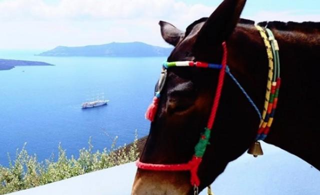 Гърция забрани дебели туристи да яздят магарета