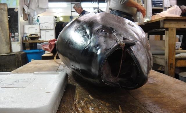Най-големият рибен пазар в света отвори врати на ново място