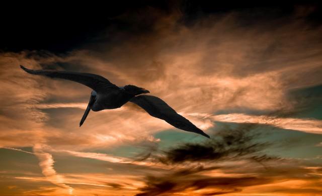 Искате ли да научите повече за защитените видове у нас?