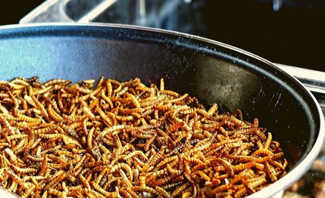 Мезета с крачета: Биолог произвежда домашен чипс от буболечки