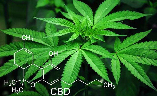 Защо компаниите за марихуана разочароваха инвеститорите?