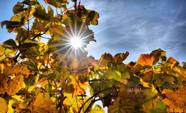 Очаква ни топла октомврийска седмица