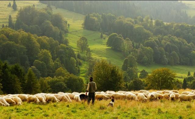 Фермерите ще получат 1 млрд. лв. до края на годината
