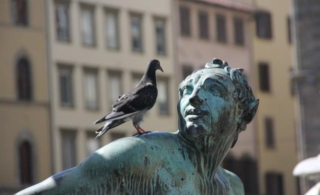 В името на Instagram: туристи плащат на хора да плашат гълъбите