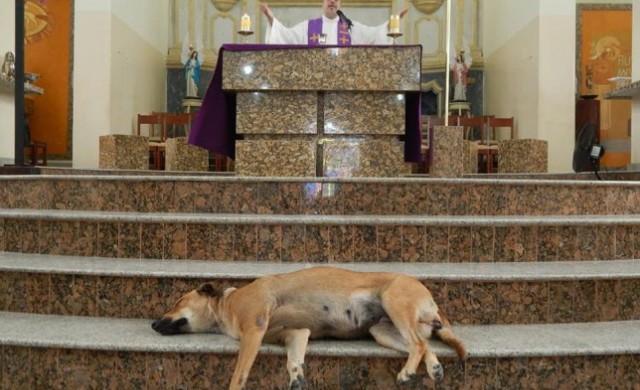 Защо свещеник кани улични кучета в храма по време на служба?