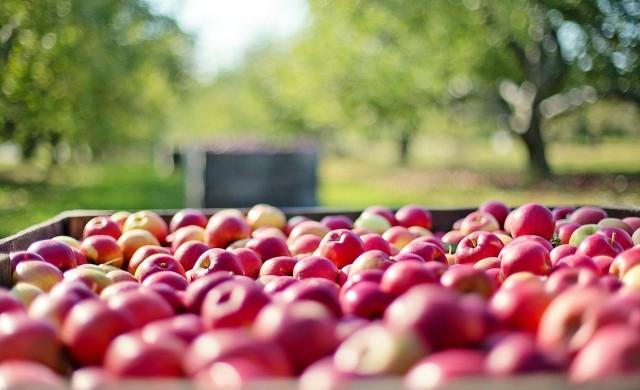 Селското ни спопанство произведе продукция за 8.5 млрд. лв през 2019 г.