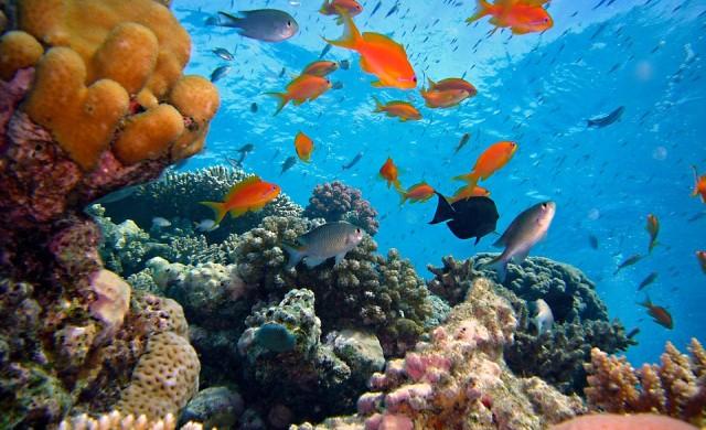Коралов риф с големината на Емпайър Стейт Билдинг откриха в Австралия