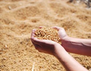 Най-големият износител на соя търси внос на суровината. Какво се случи?