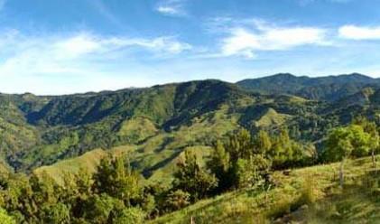 М. Найденов: Изсечени са 30 000 куб. м от царските гори