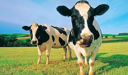 Найденов : 104 лв. ще бъде субсидията за едър рогат добитък