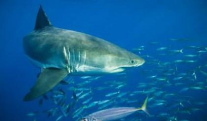 Ловим акули с голи ръце