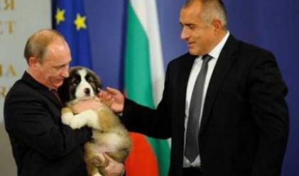Руснаците заляха нета с предложения за име на кучето Йорго
