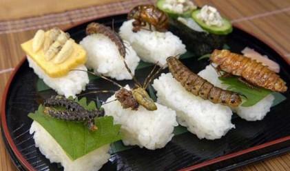 Колко насекоми изяде днес?