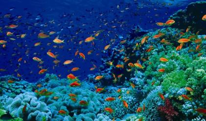 Пет причини да се гмуркате в Червено море