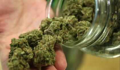 Легализираха марихуаната в Калифорния
