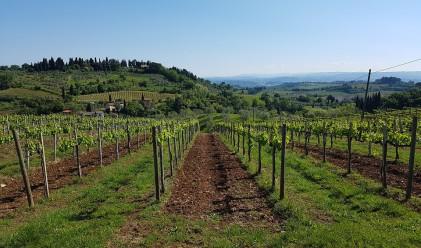 300-годишната история е това, което прави виното кианти специално