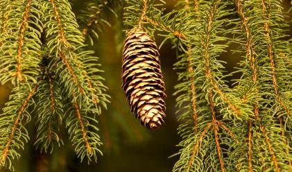 Коледната елха на София тази година няма да е пред хотел Рила