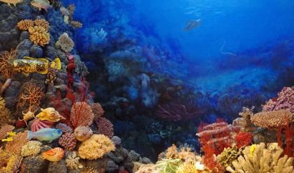 Регистрираха най-голямото измиране на корали в историята