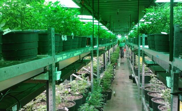 Какви са заплатите в марихуана индустрията