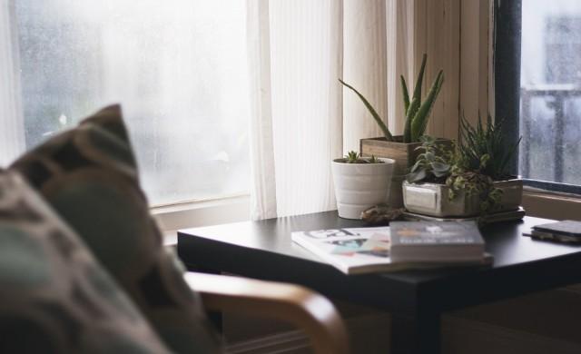 4 полезни свойства на стайните растения