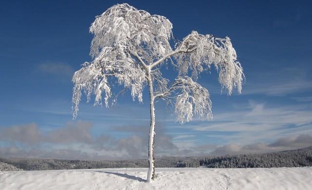 116 снегорина чакат на предварително предвидените места в София