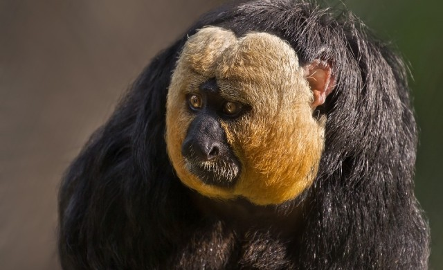 7 невероятно грозни животни