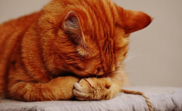 Как котка с наднормено тегло може да бъде качена на самолет?