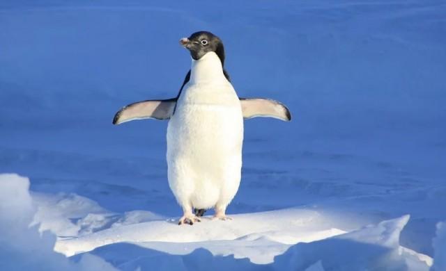 Кой е най-безопасният начин да ходим по лед?