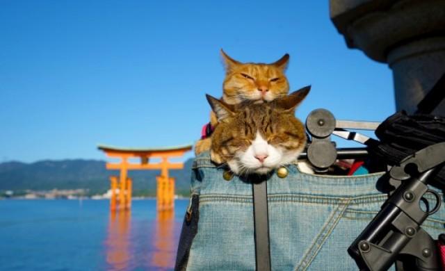 Запознайте се с пътуващите котки от Япония