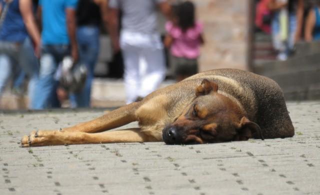 Какво е общото между уличните кучета и строителството?
