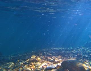 Бъдещето на електромобилите се крие на дъното на океана