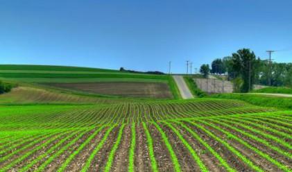 Кризата понижи цените на земеделската земя